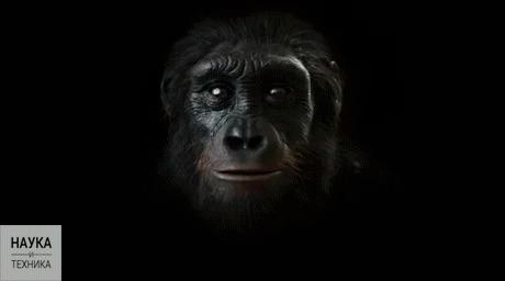 6 миллионов лет человеческой эволюции