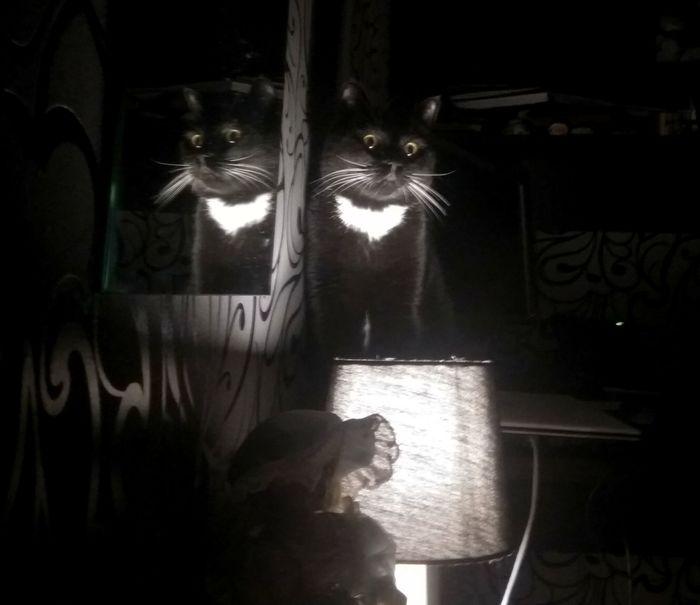 Кот с лампой Кот, Кот с лампой, На случай важных переговоров