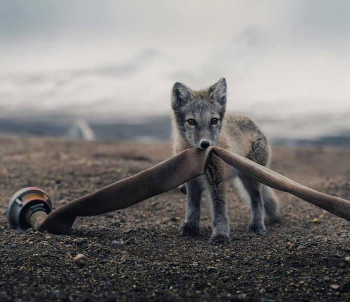 И лисички взяли спички... а нет, это другая история... Лиса, НЕспички, Пожарный, Фотография