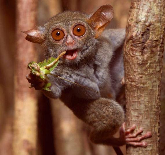 Предок всех плацентарных млекопитающих питался насекомыми Генетика, Млекопитающие, Плацентарные, Биология, Ферменты