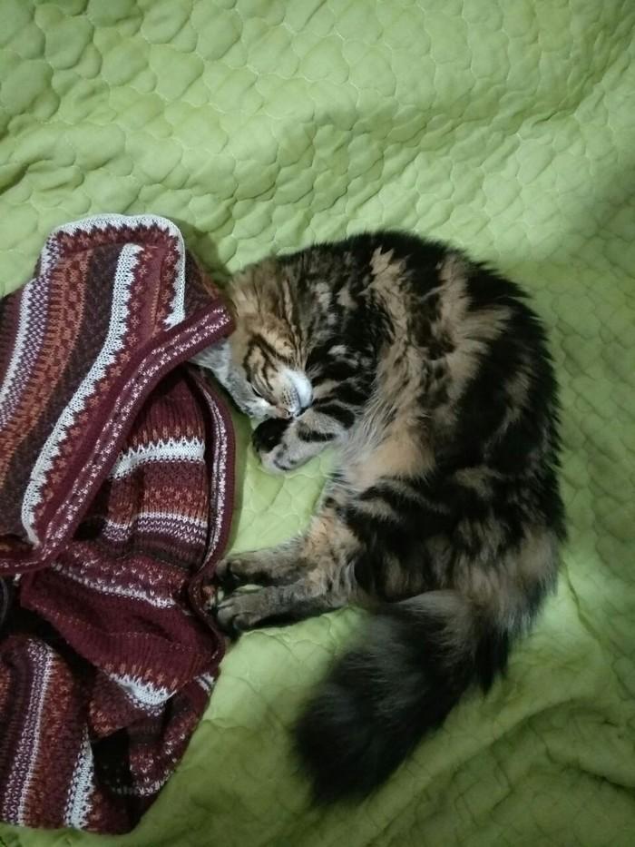 Моё котэ) Кот, Калачик, Симпатичная мордочка, Длиннопост