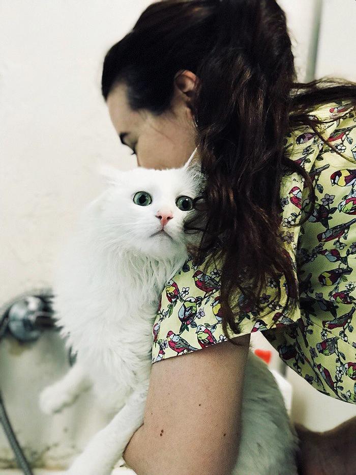 Купание кота. Кот, Ветеринарная клиника, Длиннопост, Дом для одиноких кошек, Приют для животных, Купание