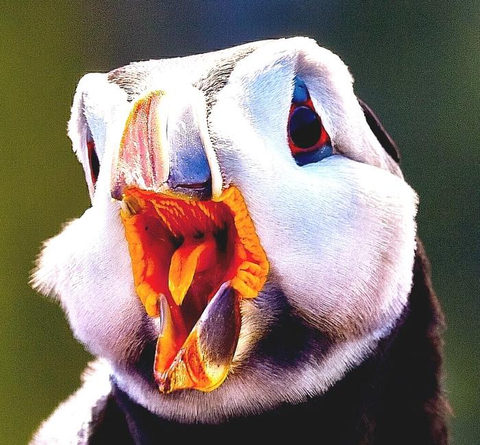 Самые добрые птицы. Часть 3 Птицы, Эмпатия, Охота, Зоопсихология, Тупик, Длиннопост, Интеллект животных, Видео