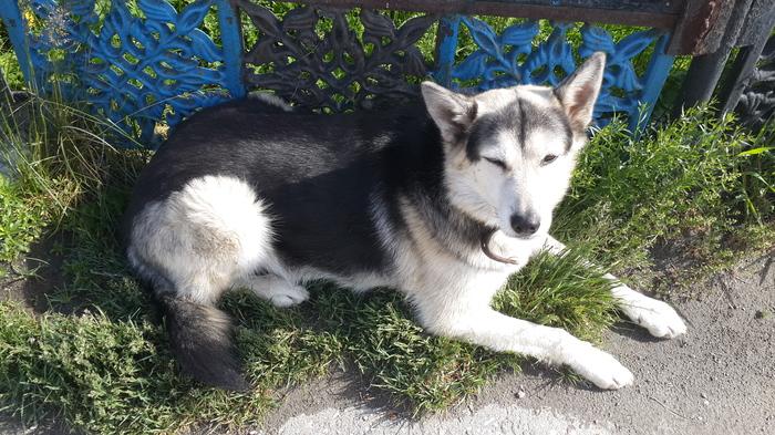 Г. Миасс, потерянный собакен в ошейнике Без рейтинга, Собака, Потеряшка, Ищу дом, Помощь животным, Миасс