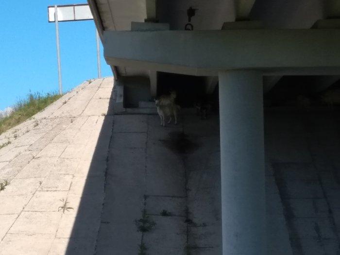 Кому мост, кому гора. Коза, Мост, Горы, Моё, Фотография, Длиннопост