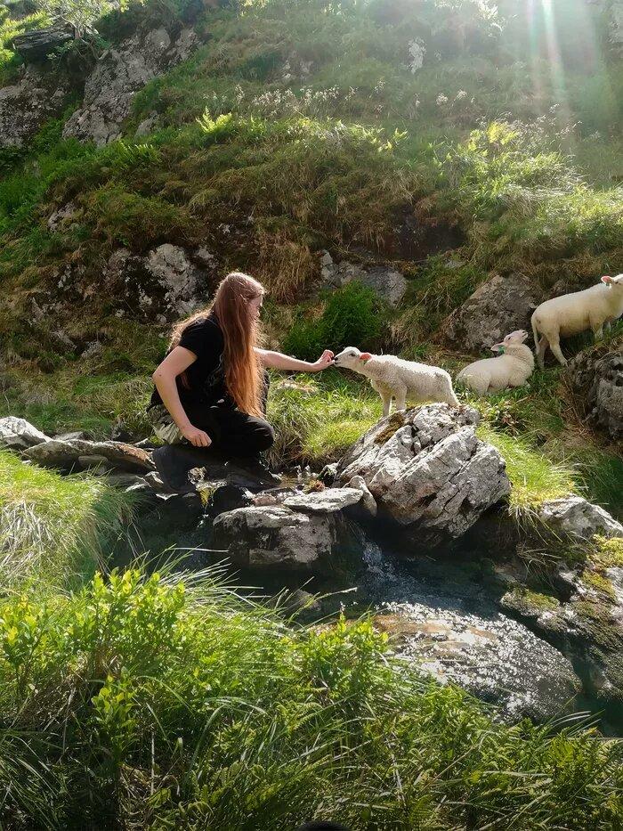 Овечка в норвежских горах