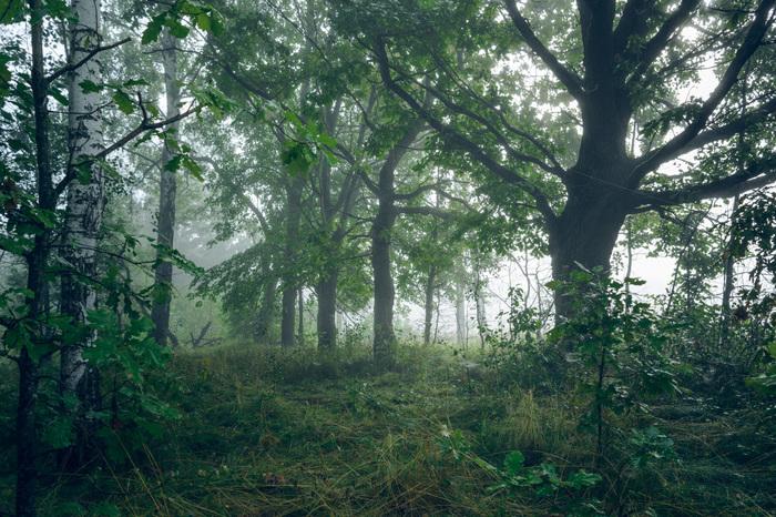 Рандомная подборка. Лес. Утро Фотография, Пейзаж, Туман, Шишки, Лес, Nikon d5200, Длиннопост