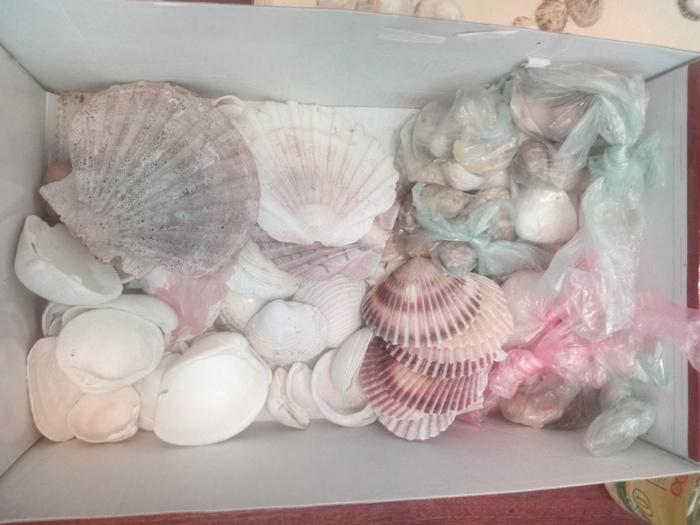 Будни лаборанта: моллюски Моллюск, Научная работа, Ракушки, Биология, Определение вида, Длиннопост