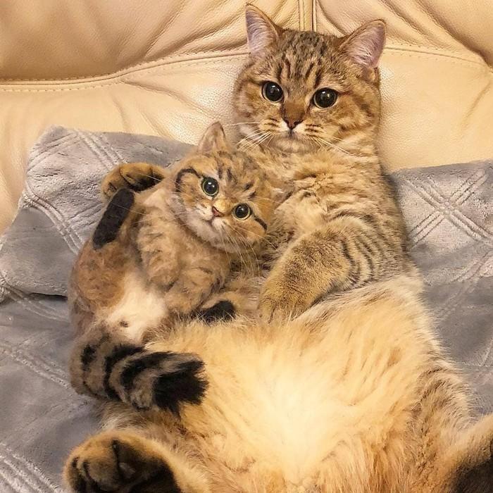 Семейные полежалки кот, милота, лапки, instagram
