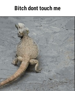 Стерва не трогай меня!