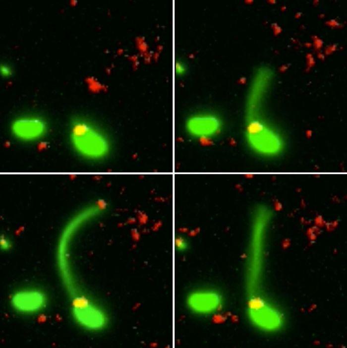 Ученые впервые увидели, как бактерии получают устойчивость к антибиотикам. Бактерии, Антибиотики, Ученые, Гифка, Наука