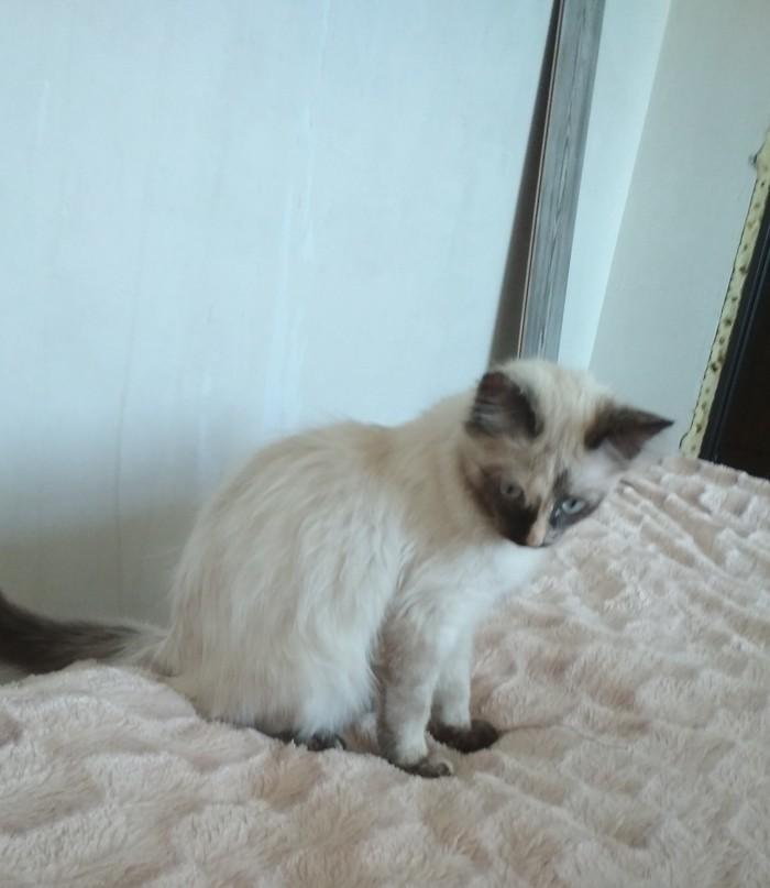 Моя котейка Кот, Котенок Гав, Длиннопост