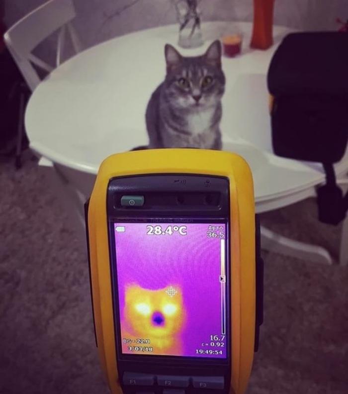 Внутри кота теплота.. Кот, Тепловизор, Эксперимент