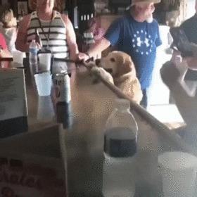 Когда ты в баре завсегдатай