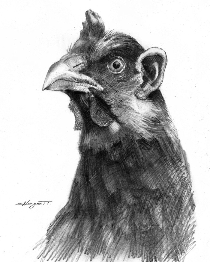 Ушастая курица. Рисунок карандашом, Рисунок, Курица, Портрет по фото, Карандаш, Птицы, Химера