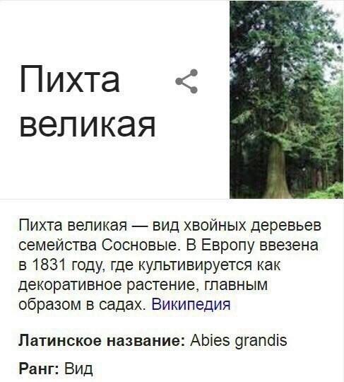 Самое скромное дерево Пихта, Дерево, Скромность, Длиннопост, Растения, Скриншот