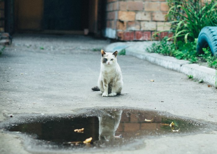 Варежка #3 Кот, Собака, Улица, Шушенское, Красноярск, Фотография, Длиннопост, Животные, Котомафия