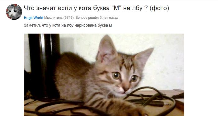 """Буква """"М"""" у кота Кот, Mailru ответы, Знаки"""
