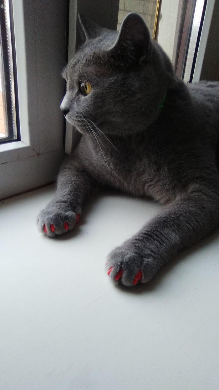 Трудный выбор) Кот, Кошатники, Котята, Длиннопост