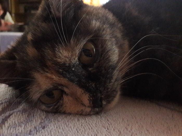 Приуныла Кот, Трехцветная кошка, Уныние