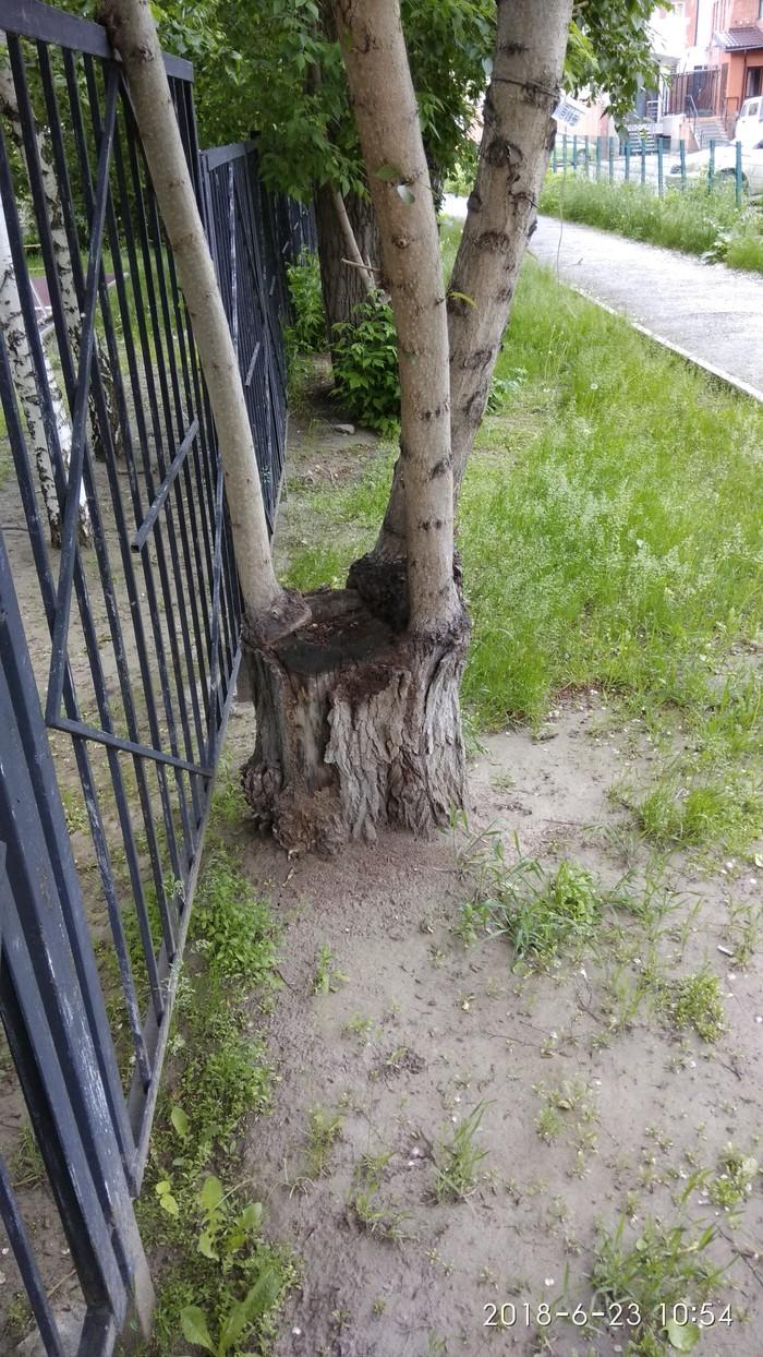 Очень жить хочется Дерево, Тяга к жизни, Фотография, Длиннопост