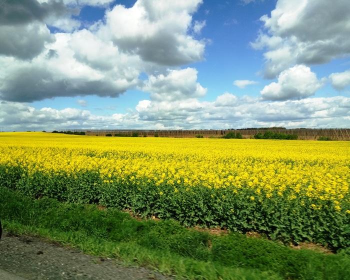 Чехия в апреле Чехия, Весна, Цветы, Смерть аллергикам, Фотография, Длиннопост