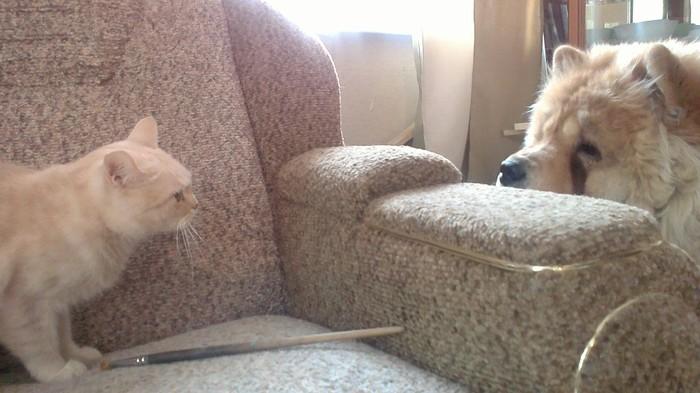 Мои зайцы:) Чау-Чау, Кот, Собака, Животные, Домашние животные, Фотография
