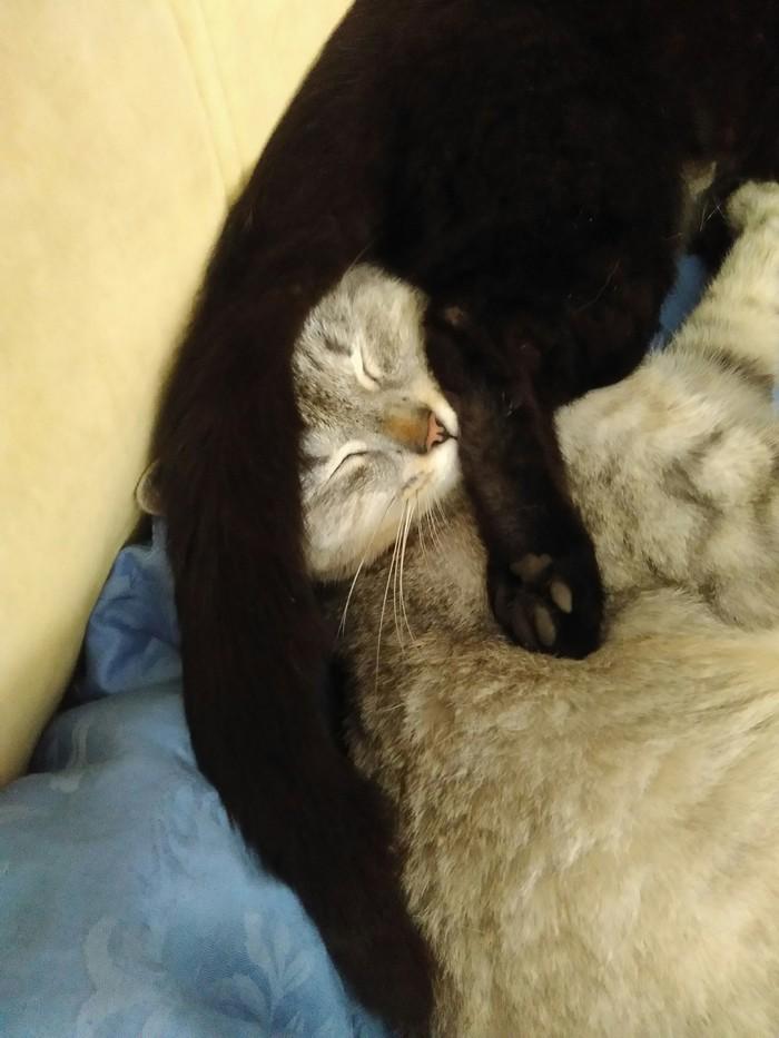 Удобненько Кот, Сон