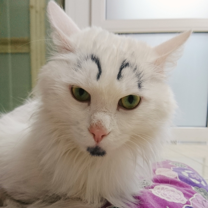Кот Кокс и его выражения лица. Кот, Ветеринарная клиника, Дом для одиноких кошек, Длиннопост