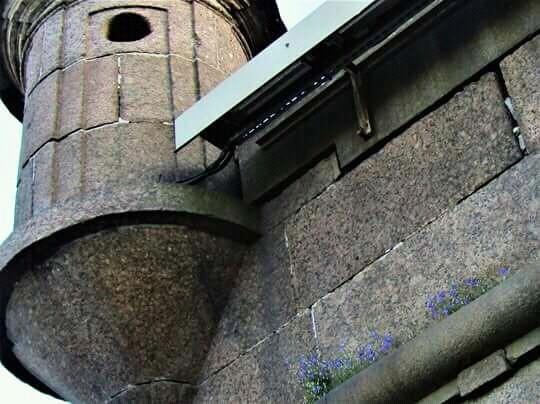 Маленькая жизнь Цветы, Петропавловская крепость, Санкт-Петербург, Взято с паблика