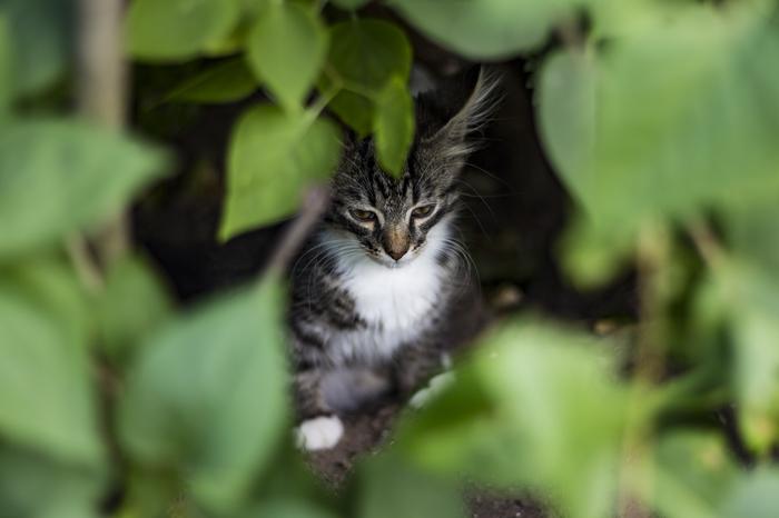 Деревенский котейка Фотография, Кот