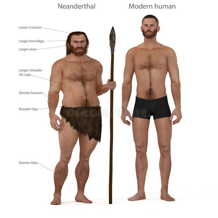 Неандертальцы. Александр Марков, Биология, Неандерталец, Эволюция, Длиннопост