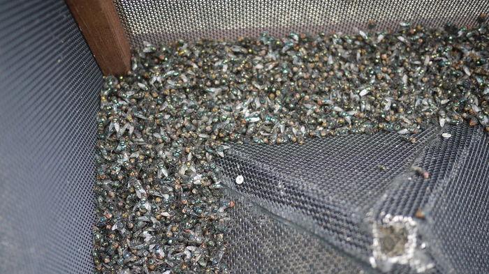 Как избавиться от мух на даче: австралийская мухоловка своими руками длиннопост, самоделки, мухоловка, перевод