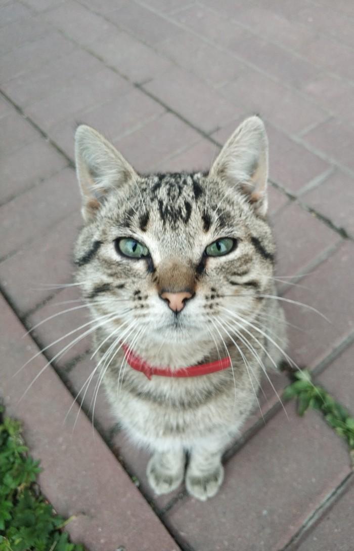 Заводские коты Кот, Котомафия, Фотография, Длиннопост