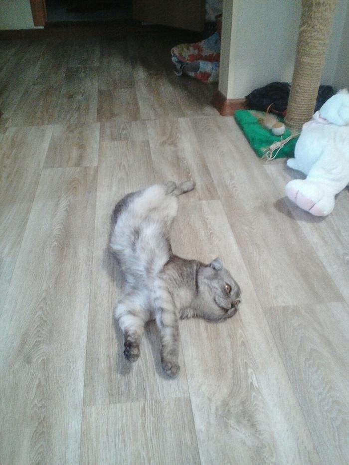 Кот Рис или история больного котёнка. кот, без хвоста, инвалид, хуже грудничка, любимчик, длиннопост