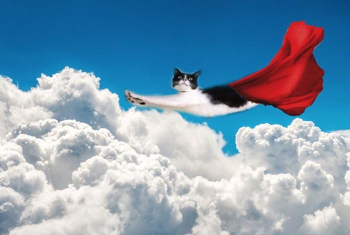 Кот — швейцарский нож Кот, Оружие, Супермен, Длиннопост