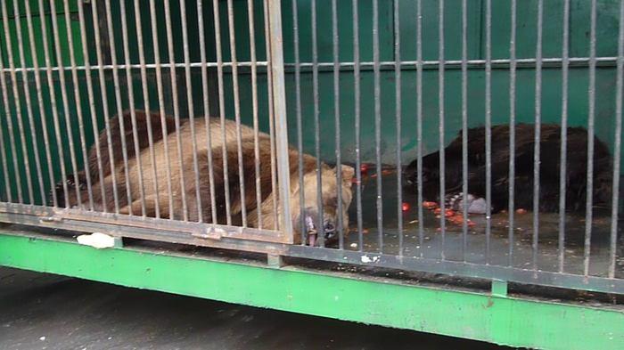 Жуткие кадры из зоопарка в Рязани Рязань, Зоопарк, Животные, Длиннопост, Жесть, Видео, Негатив