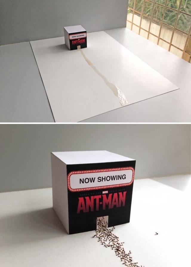 Кинотеатр для муравьев - сегодня аншлаг