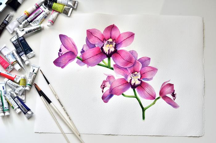 Орхидея, акварель Акварель, Ботаническая иллюстрация, Арт, Живопись, Рисунок, Цветы, Длиннопост, Орхидеи