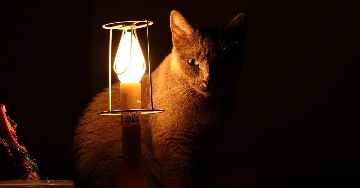 Кот лампа гифка, картинки надписями много