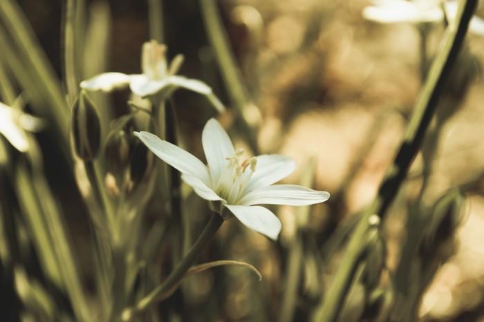 Красота вокруг нас Фотография, Цветы, Боке, Длиннопост