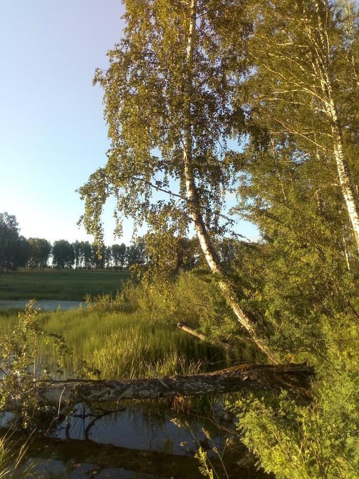 Родная природа Природа, Кузбасс, Болотце, Пруд, Начинающий фотограф, Длиннопост