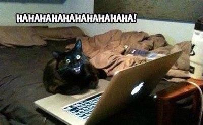 Кот помог приставам в Асино найти должников по алиментам Томск, Новости, Асино, Судебные приставы