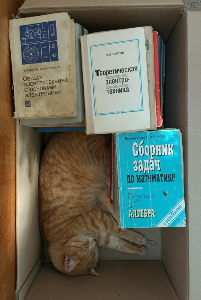 Когда твой кот - технарь Кот, Котомафия, Технарь
