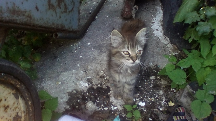 Отдам котенка Днепр Кот, В добрые руки, Днепр, Днепропетровск, Даром, Ищу хозяина, Помощь животным, Без рейтинга