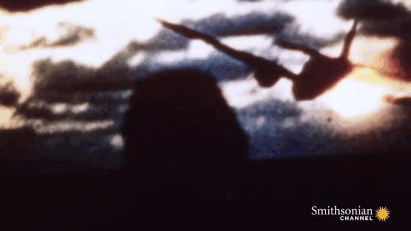 Камикадзе - последняя надежда императорского флота Авиация, Япония, Вторая мировая война, Самолет, Камикадзе, Война, Гифка, Длиннопост