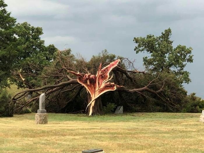 Дерево после урагана Reddit, Канзас, Дерево, Кедр