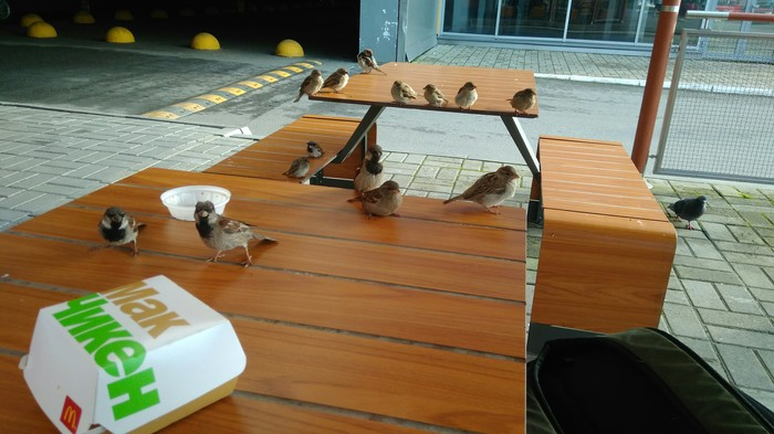 Я просто кинул им хлебушка Воробей, Птицы, Дай