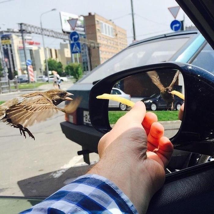 Птица в зеркале находится в другом интервале времени