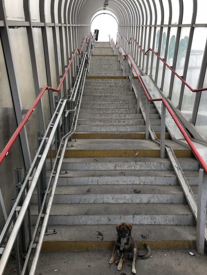 Планирование инвалид, безбарьерная среда, Мост, переход